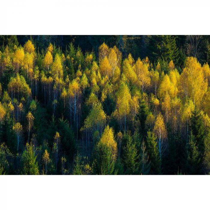 Tapet - Peste pădure [1]