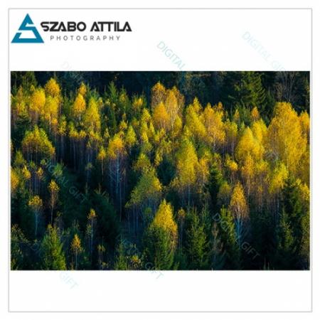 Tapet - Peste pădure1