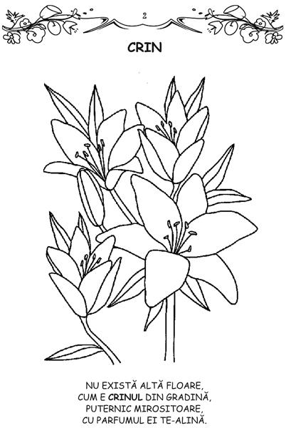 Florile - carte de colorat 2
