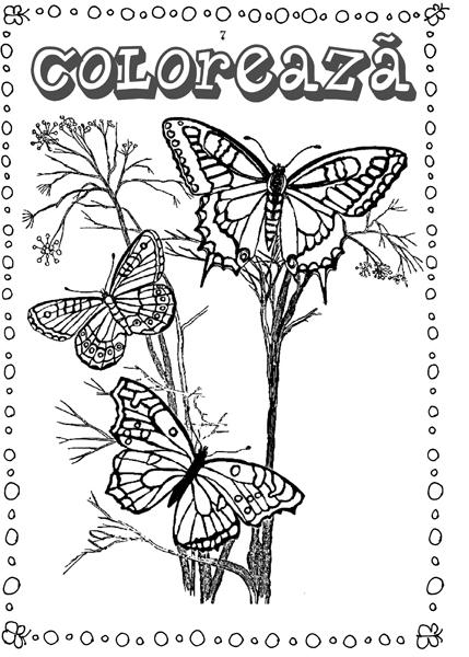 Fluturi - carte de colorat 1