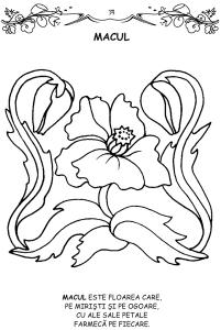 Florile - carte de colorat1