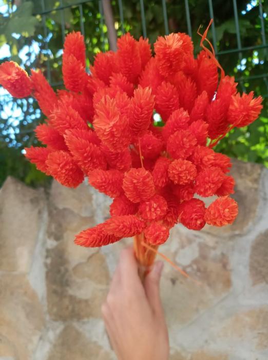 Flori uscate - Tallaris diferite nuante 4