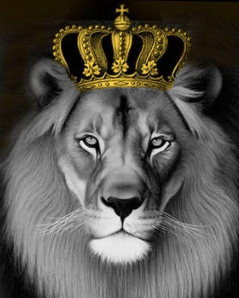 Pictură pe numere 40x50cm Leul rege 0