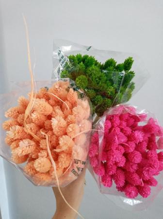 Flori uscate - Tallaris diferite nuante1