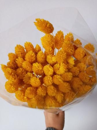 Flori uscate - Tallaris diferite nuante2
