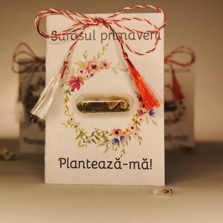 Plantisor - martisor cu seminte de flori Surasul primaverii0