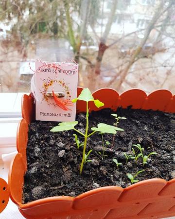 Plantisor - martisor cu seminte de flori Scara spre soare1