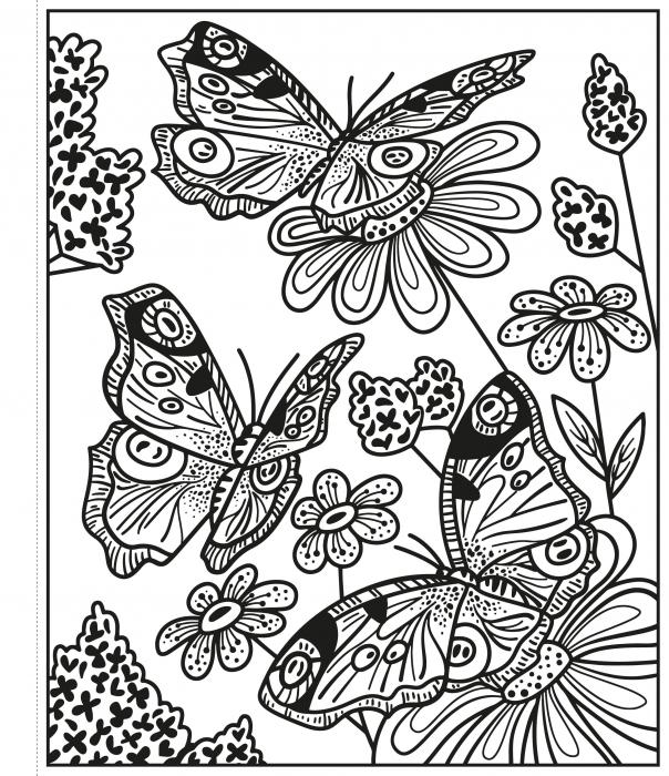 Butterflies Magic Painting Book [1]