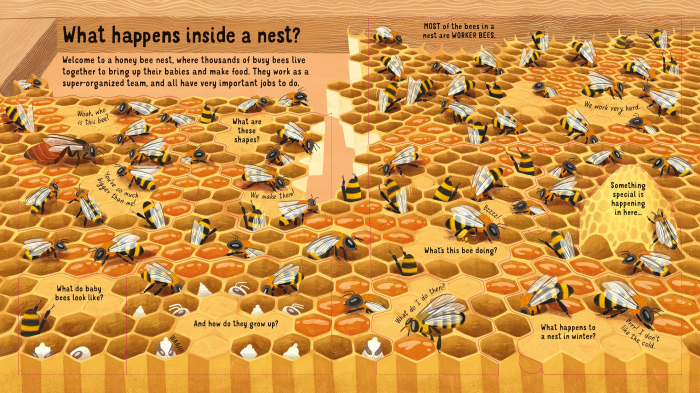Look Inside the World of Bees [3]