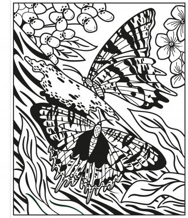 Butterflies Magic Painting Book [3]
