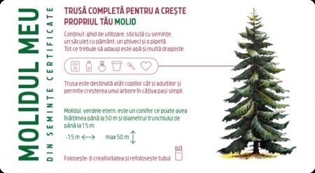 Kit de plantare Molid [1]