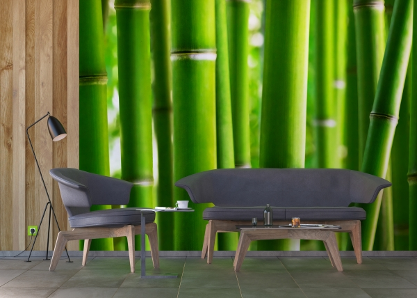 Fototapet Bambus 2