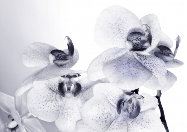 Fototapet Orhidee FTS 1306 0