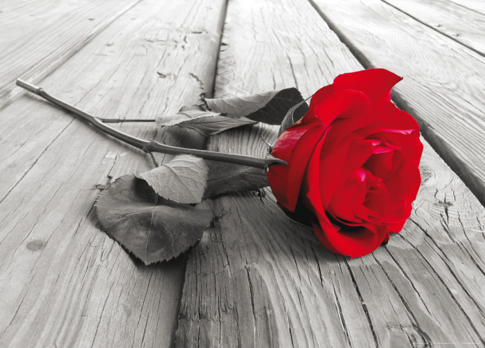 Fototapet Trandafir Rosu [0]