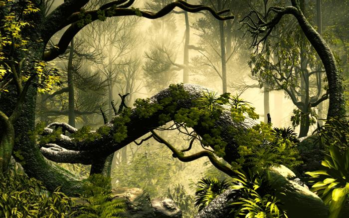 Fototapet Encahnted Forest [0]