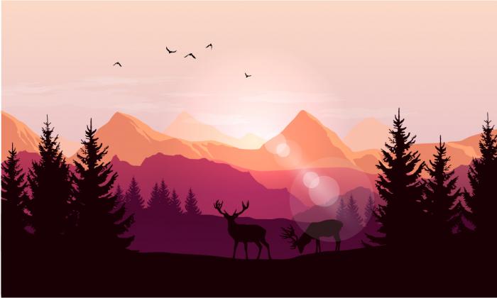 Fototapet Sunset Forest [0]