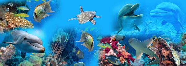 Sticker 3D pentru Podea - Delfini si Pesti in Mare 0