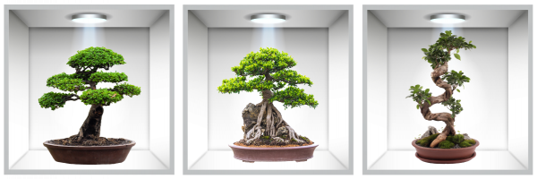 Sticker Bonsai 3D - Nise Perete - 120x40 cm 0