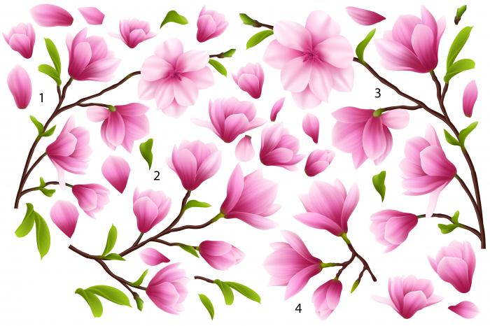 Sticker Flori de Magnolie - 60x90 cm [0]
