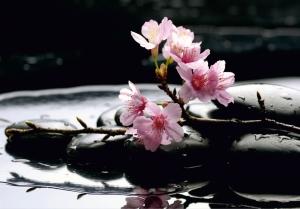 Fototapet Flori de Cires si Pietre Negre FTS 01850