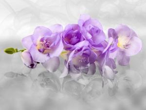 Fototapet Orhidee FTxxl 1440 [0]