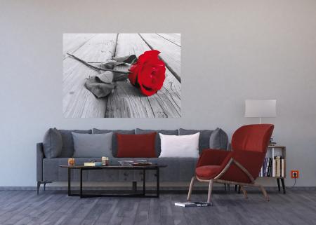 Fototapet Trandafir Rosu [2]