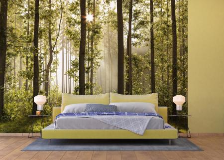 Fototapet Morning Forest [1]