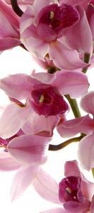 Fototapet Orhidee FTV 1514 [0]