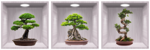 Sticker Bonsai 3D - Nise Lemn- 120x40 cm0
