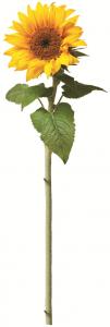 Sticker Floarea Soarelui - Sun flower - 60x80 cm [1]