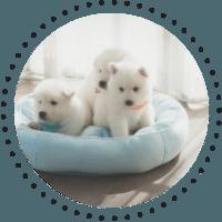 Bicarbonatul de sodiu dezodorizeaza asternuturile animalelor de companie