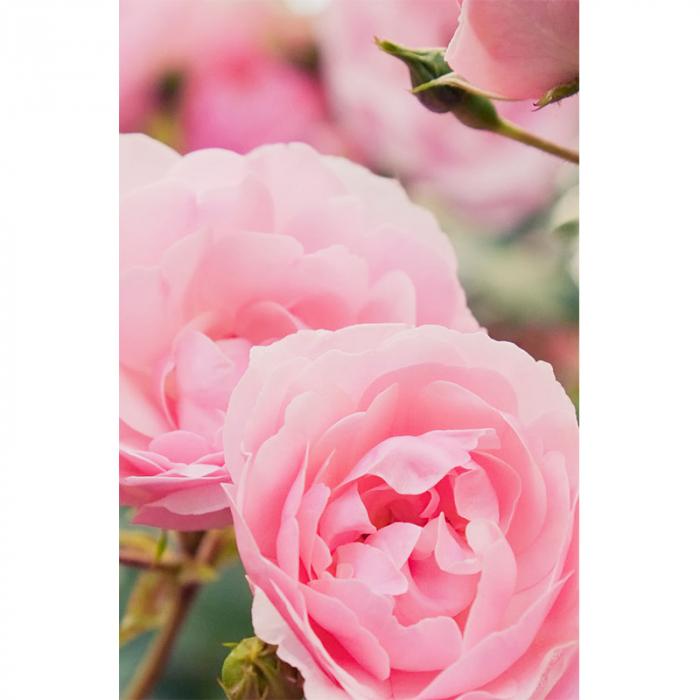 Ulei regenerator, Rose Repair | Khadi, 50 3