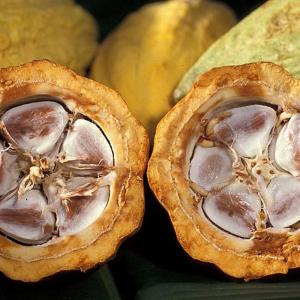 Unt de cacao organic, pellets, nerafinat, Trio Verde, 70g1