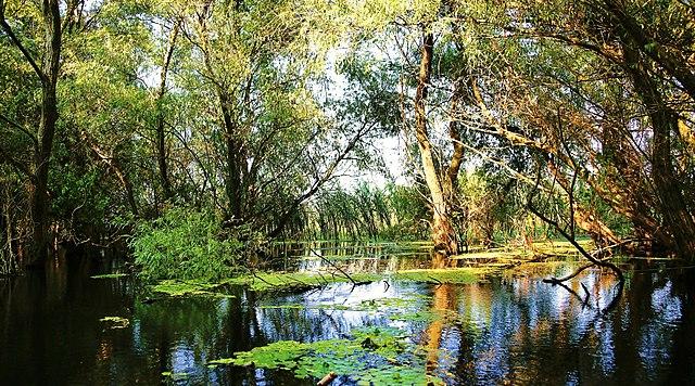 Delta Dunarii - o zi cat o vacanta 5