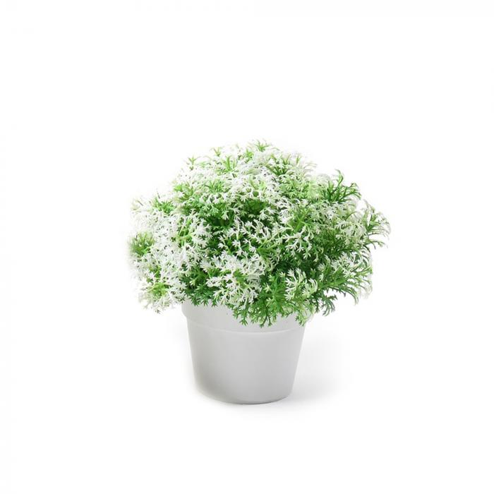 Planta decorativa in ghiveci 15 x 15x 15,5 cm - ExpoMob [0]