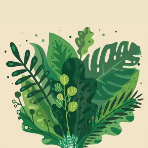 Plante conservate