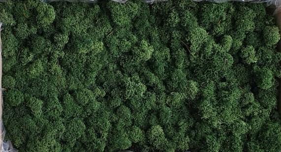 Licheni Dark Green Polar [0]
