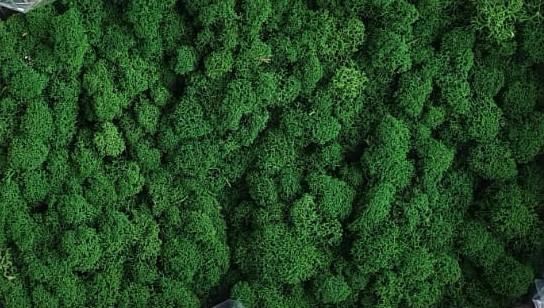 Licheni Leaf Green Polar [0]