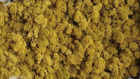 Licheni Lime Polar [0]