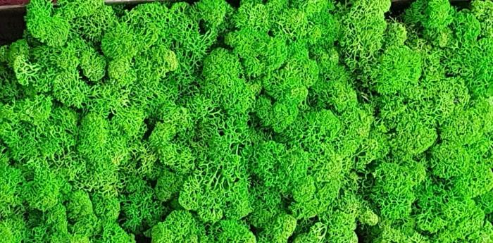 Licheni Light Green [0]