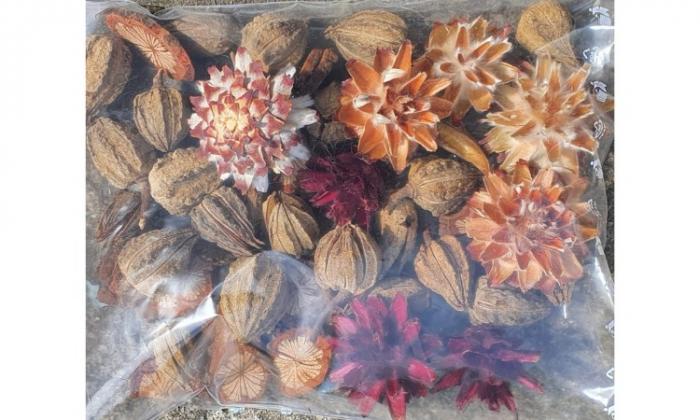 Flori de conifere [0]