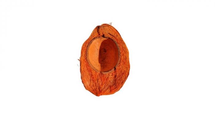 Nuca cocos [0]