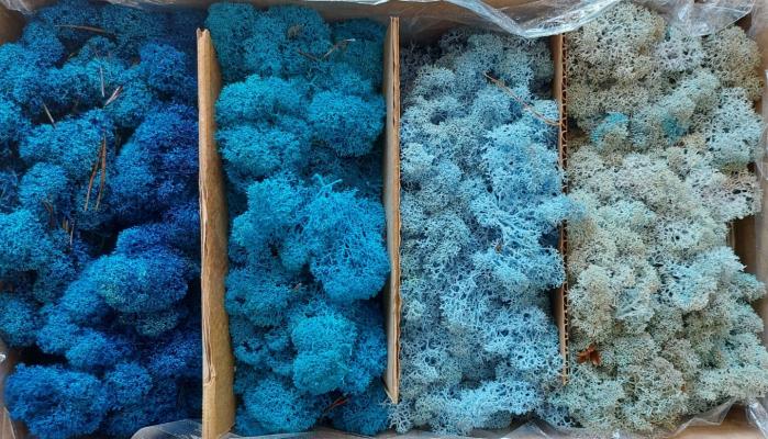 Mix albastru [0]