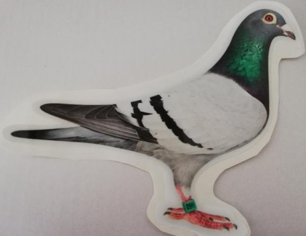 Autocolant porumbel albastru 0