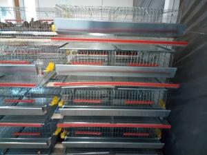 Cuscă prepelițe ouătoare capacitate 50 de capete cu adăpători automate2