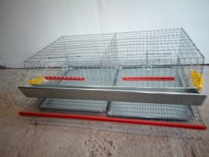 Cuscă prepelițe ouătoare capacitate 50 de capete cu adăpători automate4