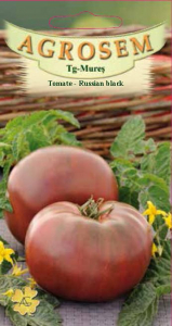 Tomate - Russian Black