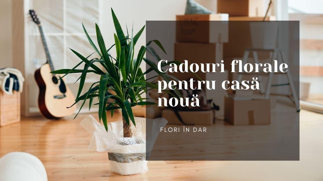 Cadouri florale pentru casă nouă, flori de apartament magice