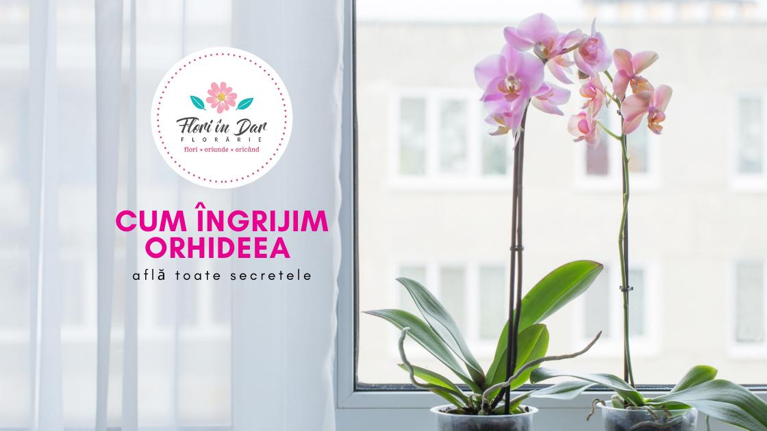 Cum îngrijim orhideea - află toate secretele!