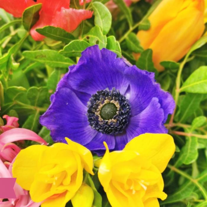 Buchet anemone,frezie și lalele [2]